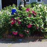 Wethersfield Bud & Blossom Garden Club